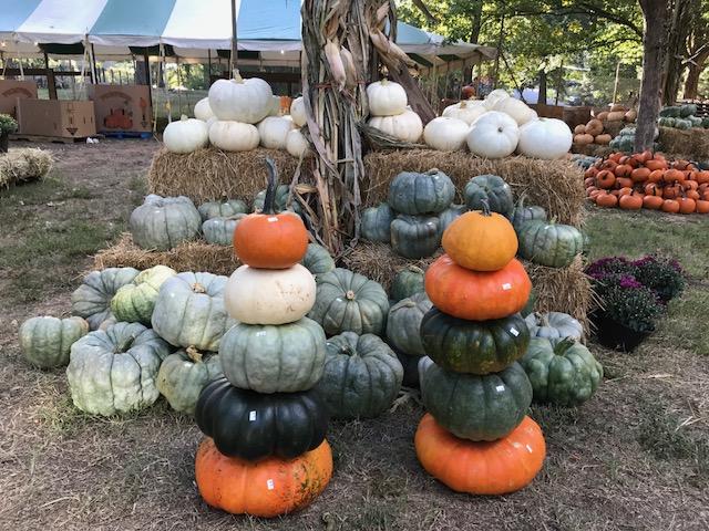 Inman Pumpkin Patch Brings Autumnal Spirit