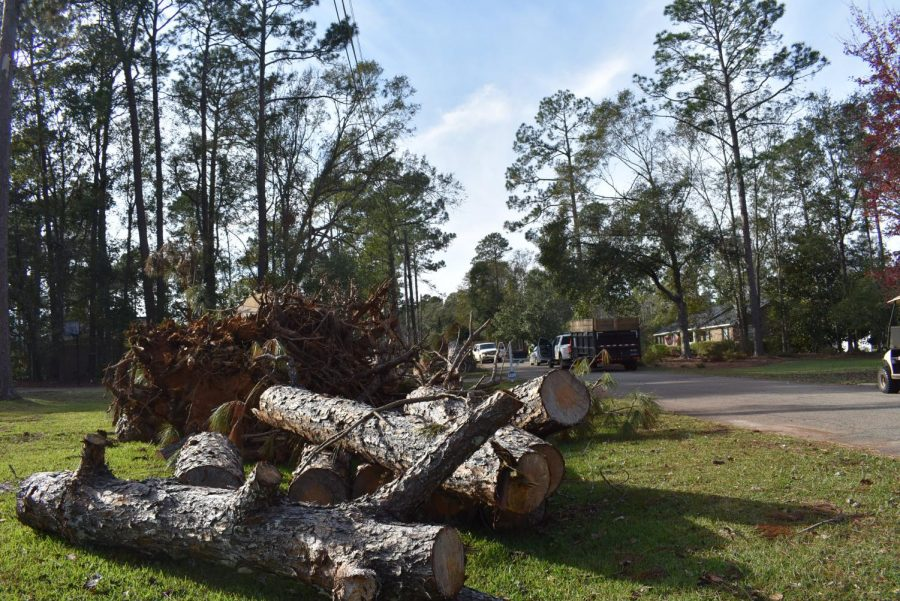 IN THE LIMBO: Limbs of trees stack up in people's front lawns as the recovery process continues.