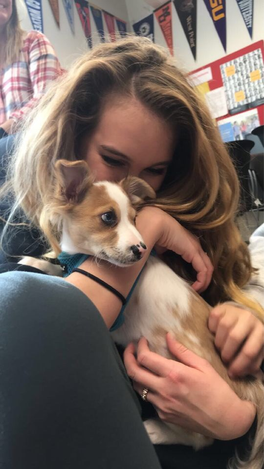 Senior Lily Muscarella cuddles a therapy dog Jan. 9 in the College and Career Center.