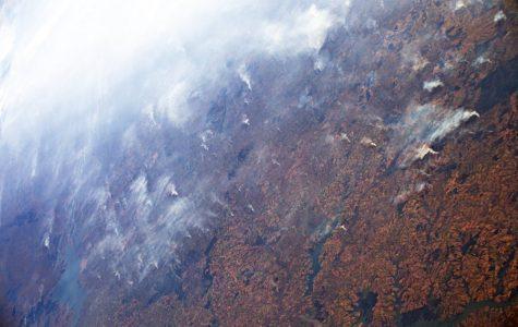 The Whole Picture: Amazon Rainforest fires