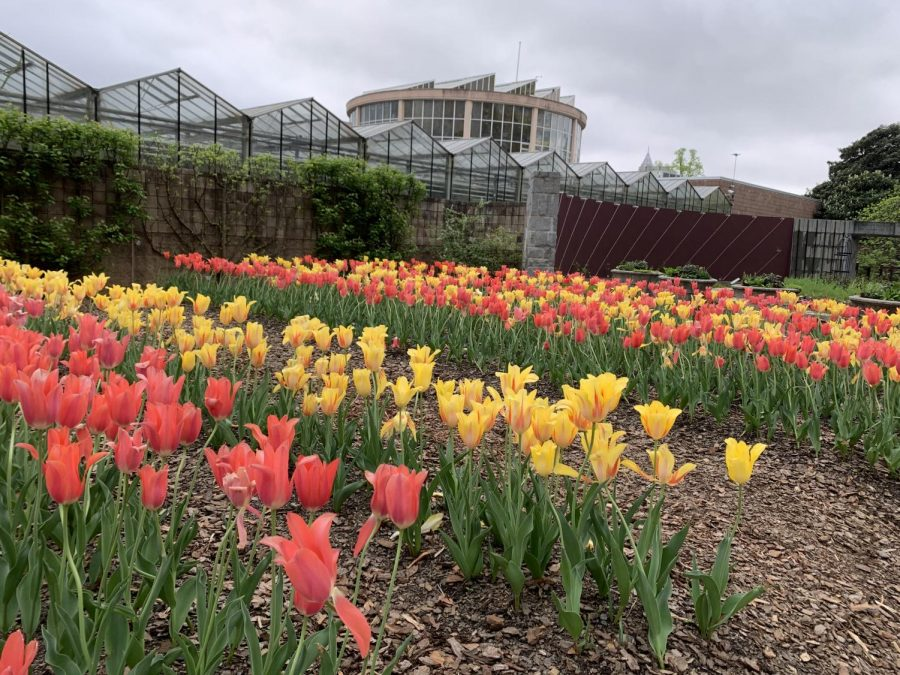 Amid the pandemic, when few things seem normal, the exhibits at the Atlanta Botanical Gardens have been a fun outside activity for Atlanta families to enjoy.